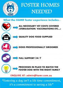 Husky and Malamute Rescue Inc Perth WA HAMR Siberian Husky Alaskan Malamute foster homes needed
