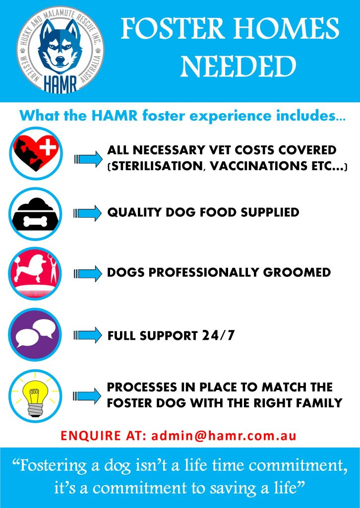 Husky and Malamute Rescue Inc Perth WA HAMR Siberian Husky Alaskan Malamute foster homes needed